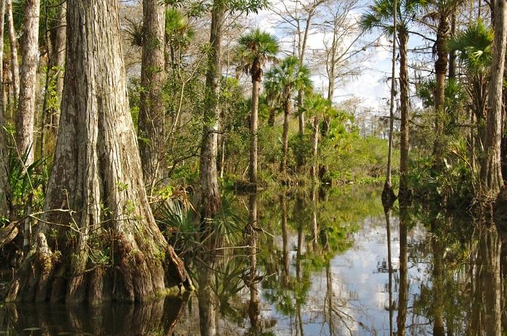 Mangroves in Everglades National Park