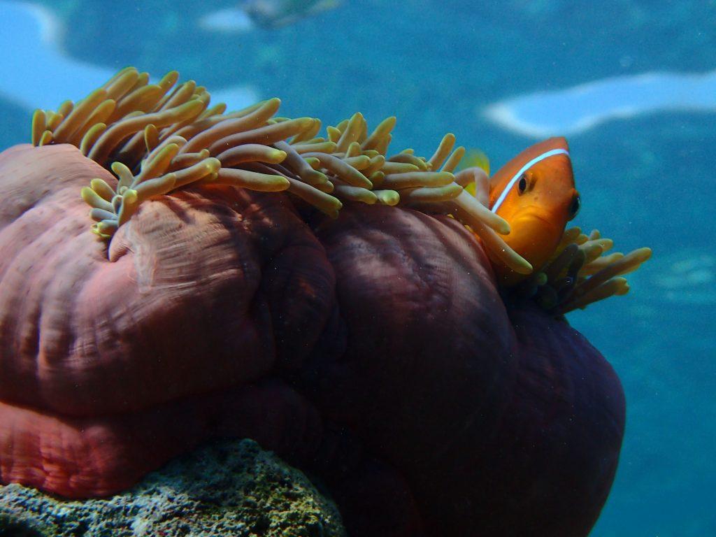 Underwater Maldives: Milaidhoo House Reef