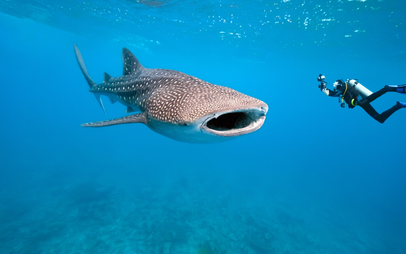 Going Under with a Maldives Dive Instructor: Diving in the Maldives